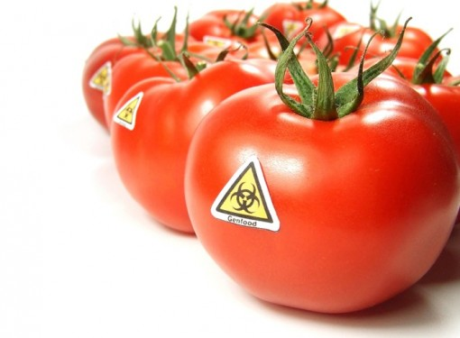 Uncovered, the 'toxic' gene hiding in GM crops: Revelation throws new doubt over safety of foods