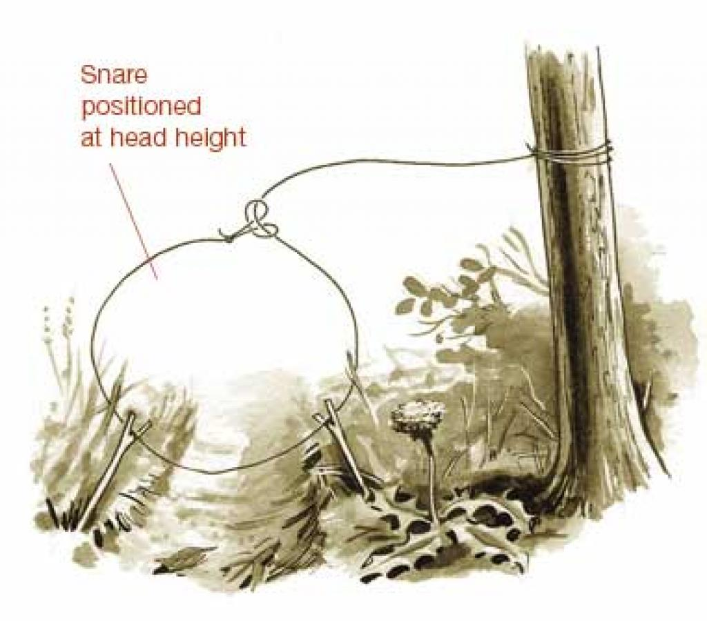 Six primitive traps for catching food in the woods the for How to make a fish trap for big fish