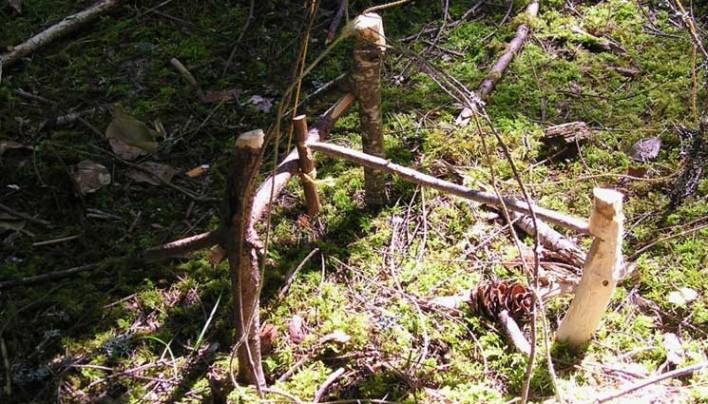 Seis trampas primitivas para la captura de alimentos en el bosque