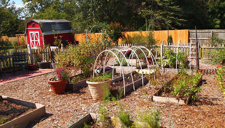 Vegetable Garden Ideas For Beginners vegetable garden planning for beginners - the prepper journal