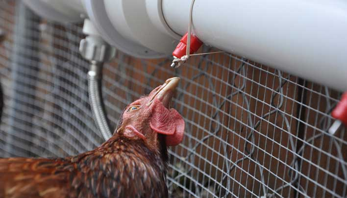 AutomaticChickenWaterer