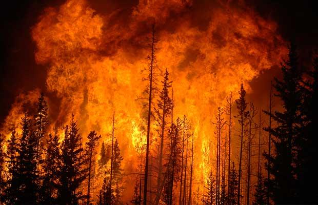 Forest fire survival download djoles