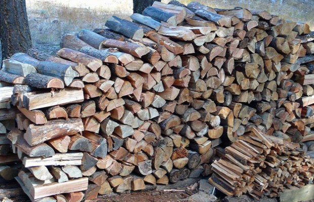 What type of firewood is best the survival place