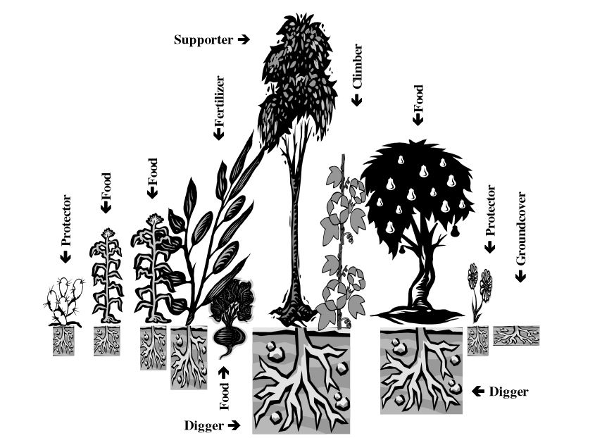 Diagram of a food guild.