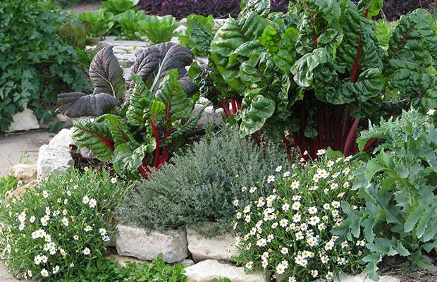 Ten Plants for Edible Landscapes - The Prepper Journal