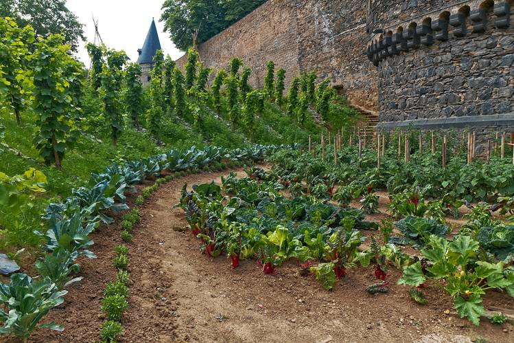 Growing food and herbs in long sweeps between sets of castle walls.