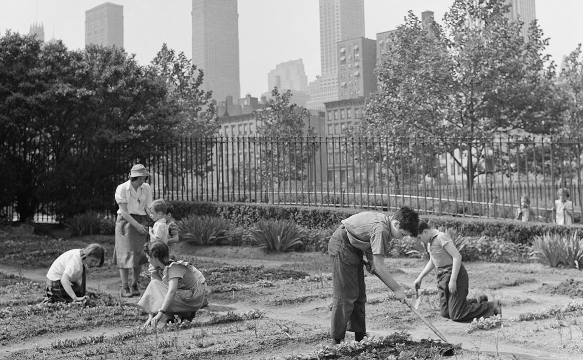 Victory gardens will sprout up everywhere during food shortages.