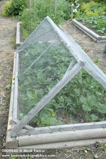 Garden Hacks Repurpose Everyday Items The Prepper Journal