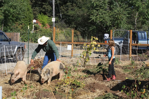 Pigs turning the garden – TheGoatWorks.net
