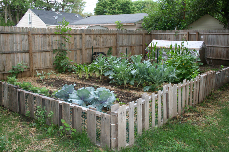 Selecting Crops for Survival Gardens - The Prepper Journal