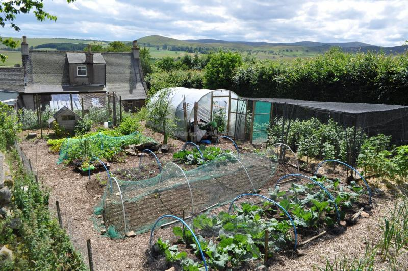 Selecting crops for survival gardens the prepper journal for Garden pool doomsday preppers