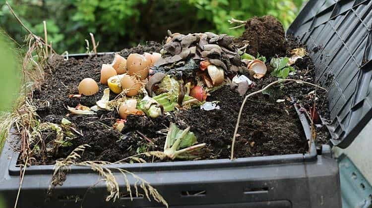 Adding to Your Compost Pile